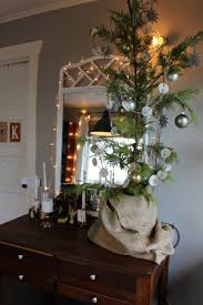 live potted christmas tree creating your space