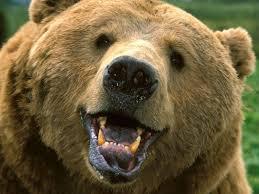 best 25 shaved bear ideas on pinterest baby bears bear cubs