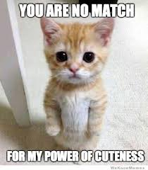 Happy Kitten Meme - you ve cat to be kitten me jacksonville humane society