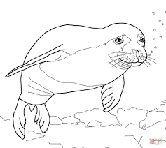 seal coloring page eson me