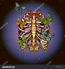 human rib cage butterflies vector illustration stock vector