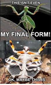 Mantis Meme - racob7 s profile