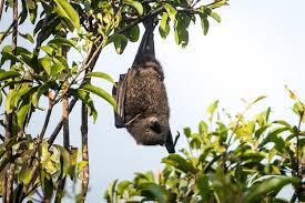 news threatened species recovery hub