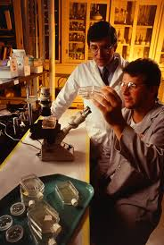of media that will be file an entomologist and a technician examine insect cell cultures