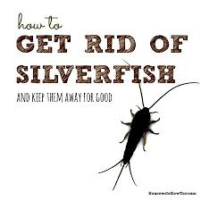 how to get rid of silverfish and keep them away housewife how