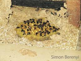 the uk u0027s super bumble bee