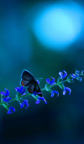 best 25 beautiful butterfly pictures ideas on pinterest