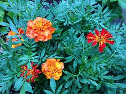 list of colours list of common garden flowers 13 best garden design ideas