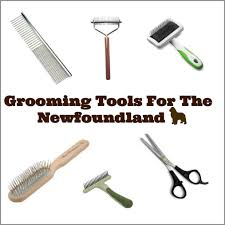 grooming tools for the newfoundland dog mybrownnewfies com