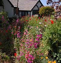 English Cottage Gardens Photos - english cottage garden in ca