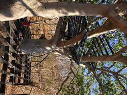 Three Story Houses by Wander Goat Travels U2013 Spikey Trees And Steel Beams A Nicaraguan