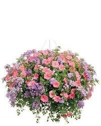 Westwood Flower Garden - plants delivery westwood ma westwood gardens flower shop