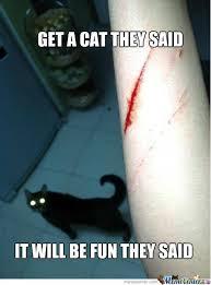 Cat Problems Meme - cat problems by amdis meme center