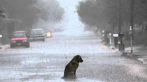 Sad Dog Meme - very sad dog blank template imgflip