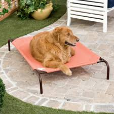 my dog is digging up the carpet carpet vidalondon