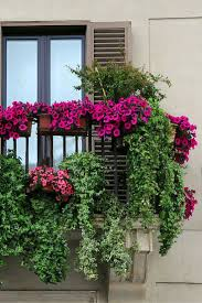 Small Garden Balcony Ideas by Pictures Balcony Flowers Ideas Free Home Designs Photos