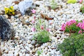 Small Rocks For Garden Small Rock Garden Constructed With Rocks And Alpine Plants Stock
