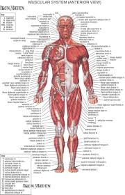 clinical human anatomy gallery learn human anatomy image