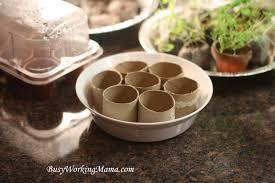 easy seed starting indoors gardening