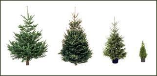 buy real trees at jacksons nurseries
