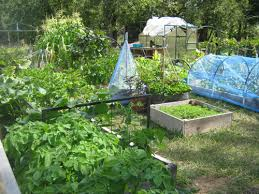 creating the perfect vegetable garden