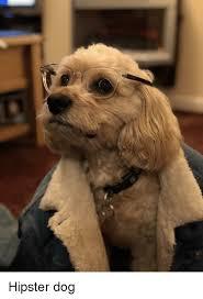 Hipster Dog Meme - 25 best memes about hipster dog hipster dog memes