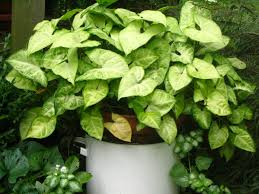 inside house plants best house plants 2015