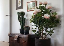 Potted Plants For Patio Best Artificial Plants For Office Artificial Potted Plants For