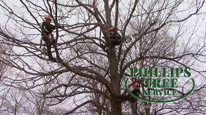 phillips tree service kingston ontario