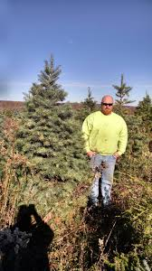 commercial tree planting wholesale christmas trees