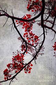 japanese style japanese style bloosom in maldives flamboyant tree ii