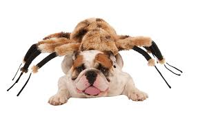 english bulldog halloween costumes all about spider costumes for halloween and more