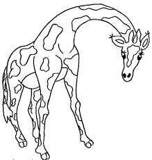 free coloring pages giraffe www mindsandvines com