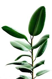 types of indoor plants large size of plants inside plants best