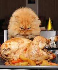 22 cats that are ready for thanksgiving