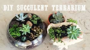 diy terrarium with succulents youtube