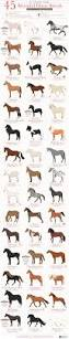 45 beautiful horse breeds 2b png animals and nature pinterest