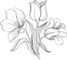 engraved bush tulips vector art thinkstock