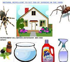How To Get Rid Of Mosquitoes In Backyard by How To Get Rid Of Mosquitoes In The Swimming Pool In The House