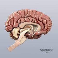 3d Head Anatomy Human Head Anatomy Archives Human Anatomy Library