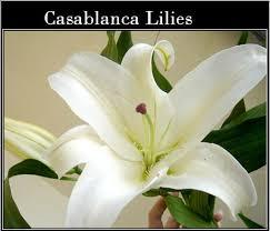 casablanca lilies casablanca lilies flowers plant home landscaping