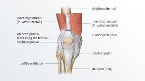 Anatomy Slides Anatomy Shoulder Joint Choice Image Learn Human Anatomy Image