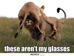 Lion Meme - lion memes funny lion pictures memey com