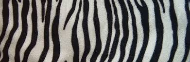zebra pattern free download 30 striking zebra print texture for free download naldz graphics