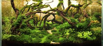 japanese aquascape international aquatic plant layout contest iaplc silver award