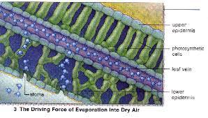 Lab Bench Transpiration Transpiration