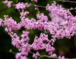 native missouri plants order native trees and shrubs from mdc state nursery missouri