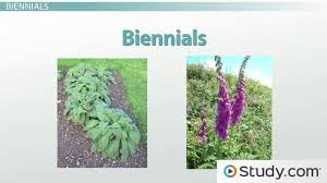 seasonal growth cycles perennial annual and biennial plants