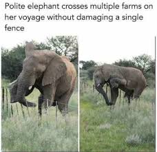 Elephant Meme - polite elephant crosses multiple farms on her voyage without