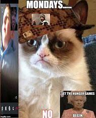 Grumpy Cat Monday Meme - best 25 ideas about grumpy cat meme find what you ll love